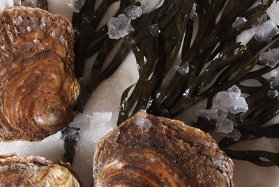 Juicy Whitstable Oysters PGI.