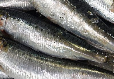 All about Cornish Sardines