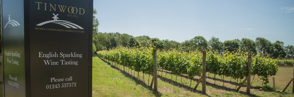 Tinwood-vineyard-30